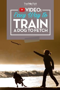 How To Train A Dog To Fetch: Quick and Easy-To-Follow Video Guide. You may think that learning how to train a dog to fetch is simple and won't take much effort. Most people think that dogs are naturally inclined to fetch and that it doesn't take much effort to teach them the game. #dogs #youtube #video #howto #topdogtips #fetch #training #dog #train #easy #tips #advice #game
