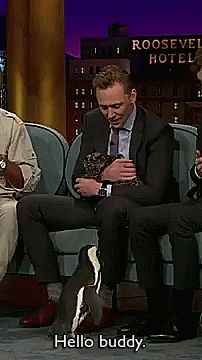They're all cute animals - including Hiddleston
