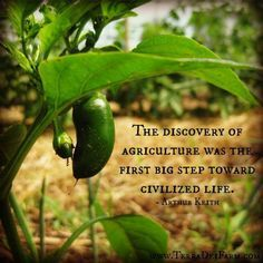 Agriculture: the first step toward civilized life.