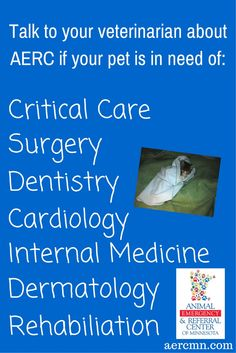 In the Twin Cities, the Animal Emergency & Referral Center of Minnesota offers: Critical Care, Surgery, Dentistry, Cardiology, Internal Medicine, Dermatology, and Rehabilitation. ALL FOR YOUR PET! Go to aercmn.com to find out more! Get a referral from your family veterinarian today! #TwinCitiesveterinarianspecialists #TwinCitiesemergencypetcare #TwinCitiesveternarianspecialtymedicine #AERC #animalemergencyandreferralcenterofminnesota