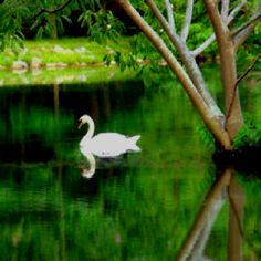 Swan Lake Please Visit Our Website Romegeorgiaorg Attraction
