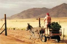 A Summer Christmas in South Africa! Christmas Tree And Santa, Summer Christmas, Nordic Christmas, Christmas Greetings, Christmas In South Africa, African Christmas, Portugal, Shepherds Hut, Africa Travel