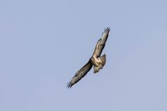 Claes`s Photo blog: fly with the birds