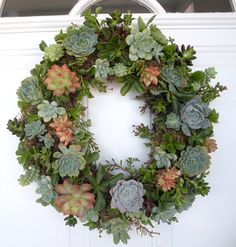 Succulent wreath I made for Christmas 2010. I planted the succulents afterwards.