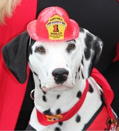 Please Vote for Molly the Fire Safety Dog 2014 Hero Dog Nominee! #BtC4A