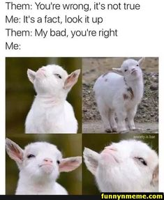 These funny animal memes are signify to brighter your day.Memes to send that special someone in your life.Read This Top 26 Funny memes animals Life Really Funny Memes, Stupid Funny Memes, Funny Relatable Memes, Haha Funny, Funny Stuff, Funny Pics, Terrible Jokes, Funny Captions, Funniest Memes