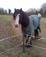 Being an equine home visitor means I get to help horses find new homes | Animal welfare blog | RSPCA Insights