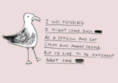 love seagulls... and chips