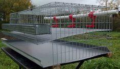 клетка для перепелок Backyard Birds, Chickens Backyard, Quail Coop, Raising Quail, Poultry House, Diy Chicken Coop Plans, Quail Eggs, Yard Design, Coops