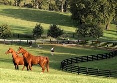 a horse training program set up and have a small breeding business for quarter horses. Dream Stables, Dream Barn, Horse Stables, Horse Barns, Beautiful Farm, Beautiful Horses, Country Farm, Country Life, Kentucky Horse Farms