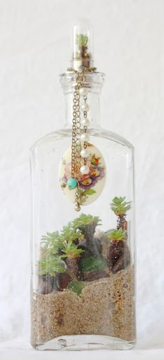 #bottle #terrarium by the slug and the squirrel