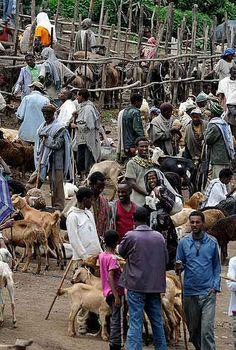 Goat Market, Lalibela, Ethiopia