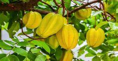 ¿Has Oído Hablar De Esta Fruta Milagrosa? Controla La Diabetes, Disminuye El Colesterol Y Combate La Inflamación. Interesante, #Compártelo! – Super Remedios