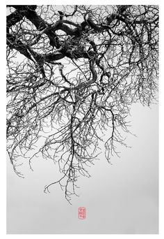 Web of Branches, by: 7e55e