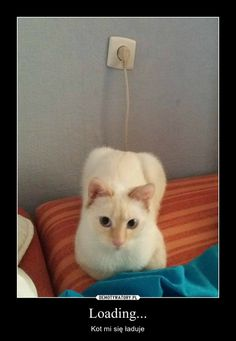 Animals And Pets, Funny Animals, Cute Animals, Best Memes, Funny Memes, Jokes, Reaction Pictures, Funny Pictures, Polish Memes