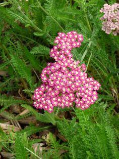 Pic Vert, Beautiful Flowers, Red, Inspiration, Gardens, Flowers, Backyard Farming, Plant, Biblical Inspiration