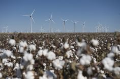 Horse Hollow, Texas, #USA ©Wind Power Works • via Global Wind Energy Council  http://www.gwec.net/media-center/photos/ #wind turbine #wind farm
