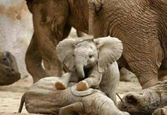 Love baby elephants