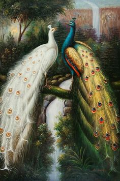 Passaro pinturas en 2019 Peacock art Colorful drawings y Bird art Peacock Drawing, Peacock Wall Art, Peacock Painting, Diy Painting, Peacock Images, Peacock Pictures, Peacock Vector, Needlepoint Canvases, Exotic Birds