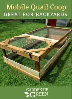 Raising quail on the ground with mobile coops for the backyard is awesome and you can build your own right here. Raising Quail, Raising Ducks, Raising Chickens, Quail Pen, Quail Coop, Backyard Farming, Chickens Backyard, Quail House, Cage