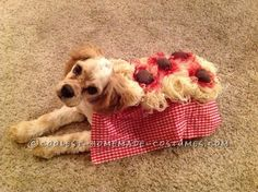 OK, so I thought hmm, spaghetti and meatballs costume for a Cocker Spaniel? Adorable! Especially since it reminds me of the famous spaghetti scene in ...