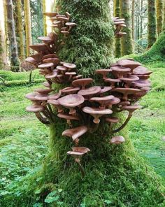 Mushroom Art, Mushroom Fungi, Mushroom Hunting, Wild Mushrooms, Stuffed Mushrooms, Growing Mushrooms, Tree Mushrooms, Mushrooms Recipes, Mushroom Pictures