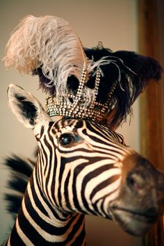 Zebra wearing a crown (:
