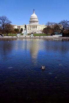 United States Capitol, Washington, DC by admathews
