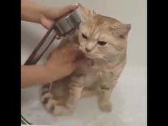 Cute Cat Bath Time   cat funny video