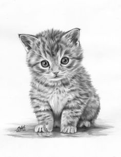 Another Kitten Drawing Amazing Drawings, Realistic Drawings, Cool Drawings, Lapin Art, Kitten Drawing, Pencil Art, Animal Pencil Drawings, Colour Pencil Drawing, Drawing Animals