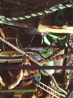 Rat cage forest theme DIY natural materials