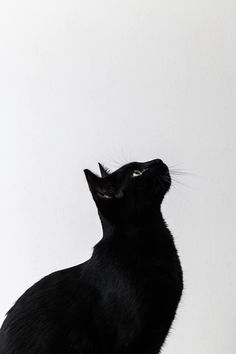 Black and White photo of a beautiful black cat Crazy Cat Lady, Crazy Cats, Cats And Kittens, Big Cats, Ragdoll Kittens, Tabby Cats, Funny Kittens, Bengal Cats, White Kittens