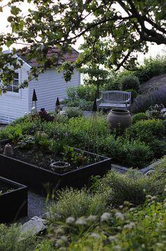 Min trädgård är som vackrast nu
