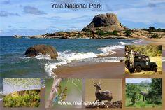 Yala National Park Sri Lanka, Touring, Transportation, National Parks, Holidays, Water, Outdoor, Gripe Water, Outdoors