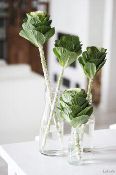 KUKKALA #leikkokaali #brassica #ornamentalcabbage