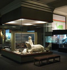 randuwa: Carnegie Museum of Natural History: The Dioramas!