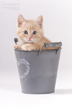 fotoshoot kitten cadeau - Google zoeken