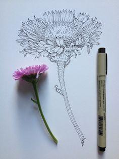 artsy в 2019 г. dibujos de flores, d Flower Sketches, Drawing Sketches, Pencil Drawings, Art Drawings, Sketching, Flower Drawings, Illustration Art, Illustrations, Motif Floral