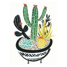 Cactus Bowl                                                       …