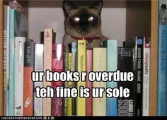 funny cat pictures - ur books r overdue teh fine is ur sole