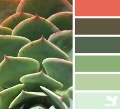 succulent hues 9.30.14
