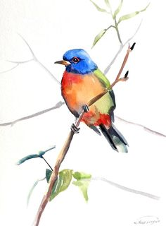 Painted Bunting original watercolor painting 12 X by ORIGINALONLY, $24.00