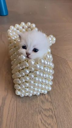 Follow us for more ideas of funny cute cats video and quality cat products. Cute Wild Animals, Baby Animals Super Cute, Cute Baby Dogs, Baby Animals Pictures, Cute Animal Photos, Cute Animal Videos, Cute Little Animals, Baby Cats, Funny Cute Cats