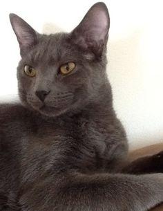 Our cat Henry. Don, Sue & Josh, Libertyville, Illinois. 5/16/13.