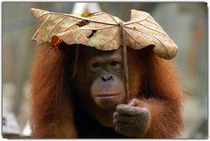 ❝Certa vez, o povo de um vilarejo decidiu se reunir para rezar pedindo por chuvas... Mas apenas um deles trouxe guarda-chuva. O nome disso é FÉ.❞