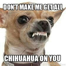 This is what our Chihuahua Chica goes around saying...lol