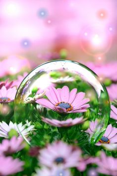 In a bubble Glass Photography, Reflection Photography, Macro Photography, Creative Photography, Amazing Photography, Landscape Photography, Beautiful Flowers Wallpapers, Beautiful Nature Wallpaper, Pretty Wallpapers
