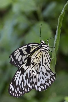 Paper Kite Butterfly by Nancy Wyld