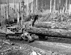logging | cat logging operations at bendickson logging