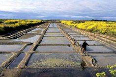 Marais salants à l'intérieur des terres de l'île de Ré, de Loix aux Portes en passant par Ars; + de 1500 ha de marais salants qui abritent aussi des milliers d'oiseaux migrateurs. Charente Maritime.